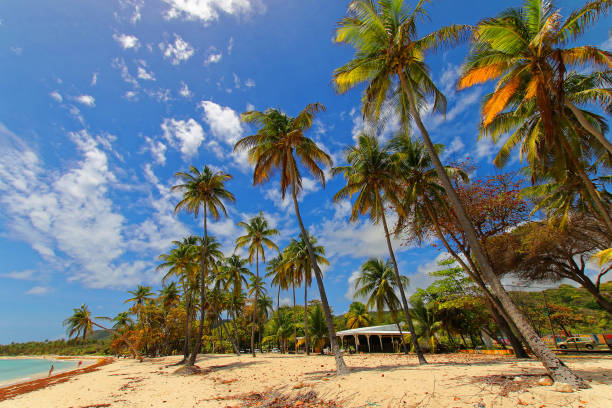 Capesterre beach and bungalow