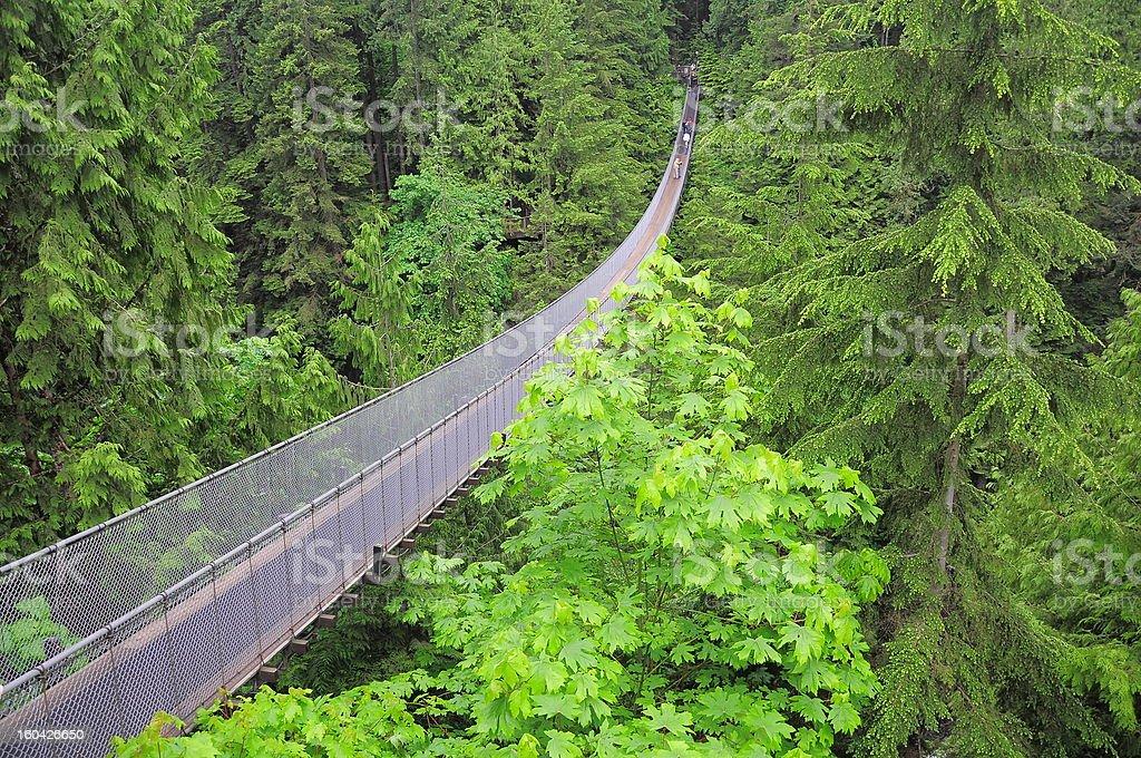 Capilano bridge. stock photo