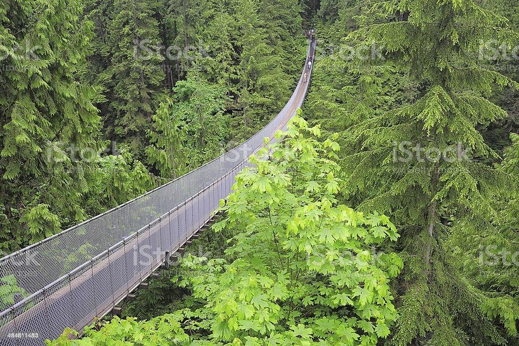 Capilano suspension bridge. stock photo