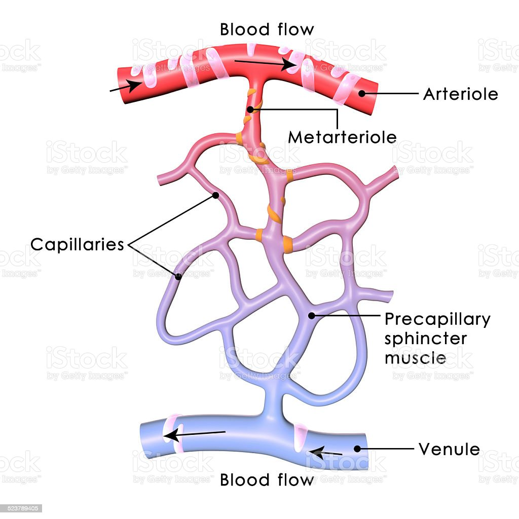 Capillaries stock photo