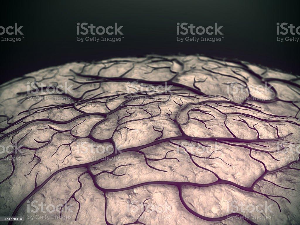 Kapillargefäße, Gehirnzellen Oberfläche – Foto