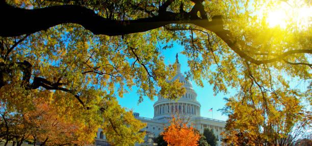 bâtiment de capital us avec la lumière du soleil en automne, washington, dc. - chapiteau colonne architecturale photos et images de collection