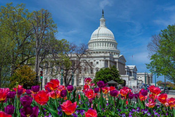 US Capitol Building with Red Flowers and Blue Sky, Washington DC, USA. stock photo