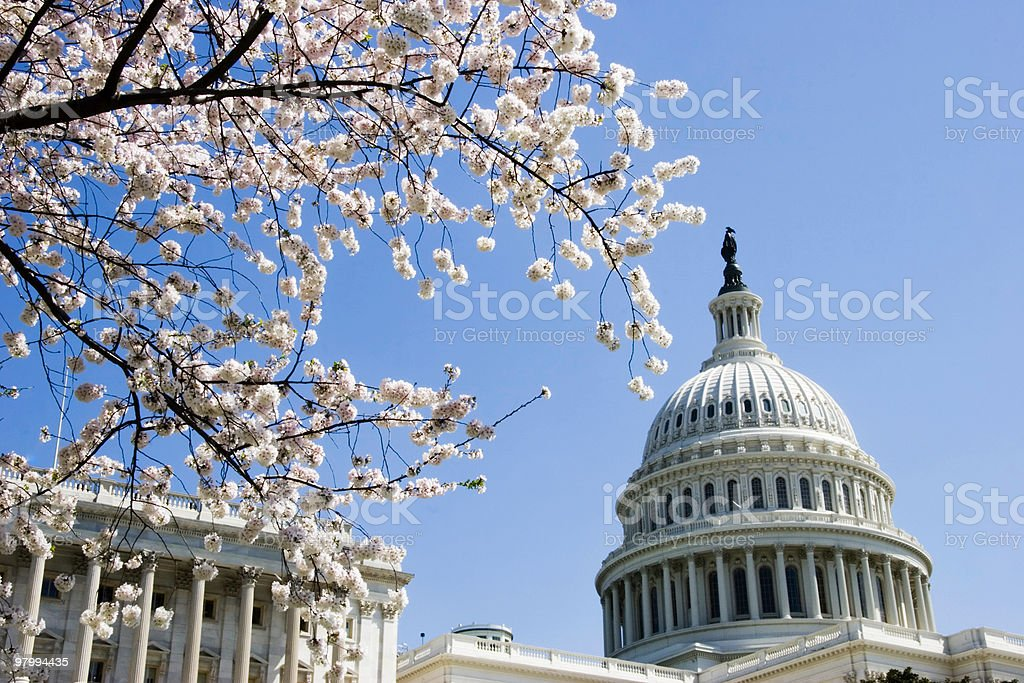 Capitol Dome and Cherry Blossoms royalty free stockfoto