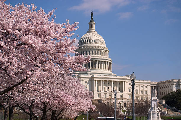 Capitol Hill Charry Blossom and the Capitol state capitol building stock pictures, royalty-free photos & images