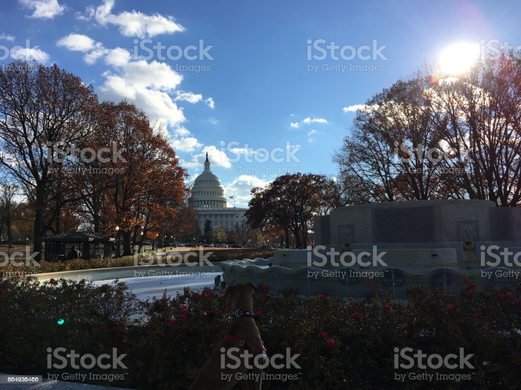 Capitol Hill view with orange fall leaves stock photo