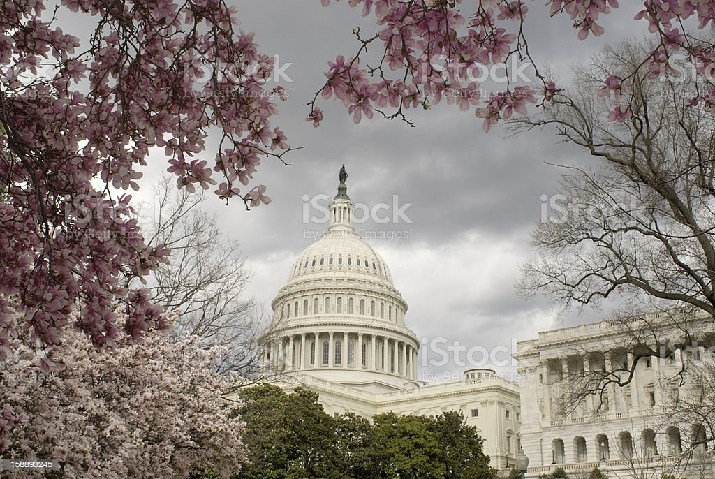 U.S. Capitol in the Spring royalty-free stock photo