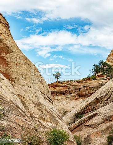 Utah juniper trees growing along the top ridge of sedimentary and sandstone erosion pocked red rock cliffs rising from a narrow canyon valley in the remote craggy stone hills and mountains at Capitol Reef National Park in southern Utah, USA.