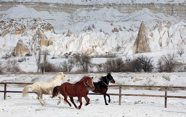 cappadocia horse - aardpiramide stockfoto's en -beelden
