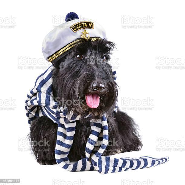 Captain dog picture id464864117?b=1&k=6&m=464864117&s=612x612&h=mrh cwlbntn1mwoomc dmtadhvxg2k1panu  6wxlwe=