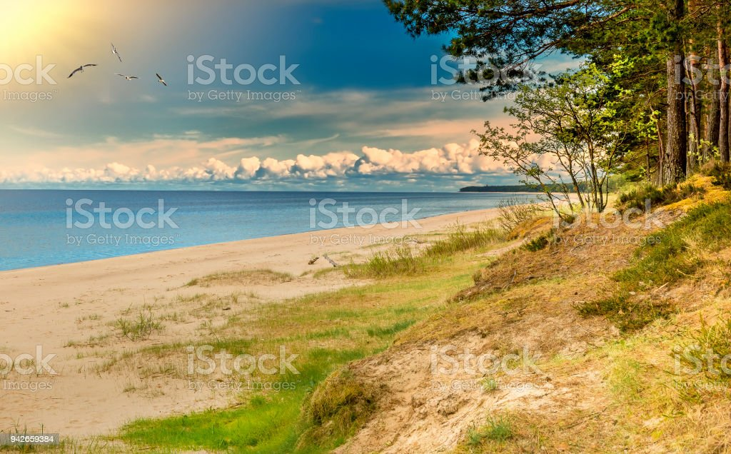 Captivating marine landscape at forestry sandy beach, Baltic Sea royalty-free stock photo