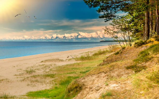 Captivating marine landscape at forestry sandy beach, Baltic Sea stock photo