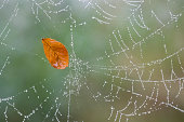 a sheet hanging in a spider web with morning dew