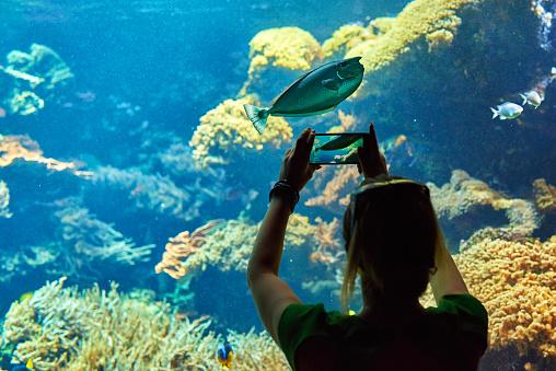617378218 istock photo capturing pictures in aquarium 495252452