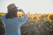 View of a young woman from the back. She's in a light blue shirt and has her hat on, enjoying the beauty of a sunflower field. She's taking a photo of it atm.