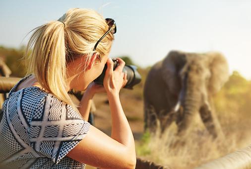 Capturing wildlife