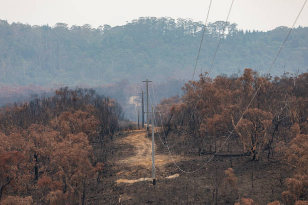 Car and motorcycle on a road amongst severely burnt Eucalyptus trees after a bushfire in The Blue Mountains stock photo