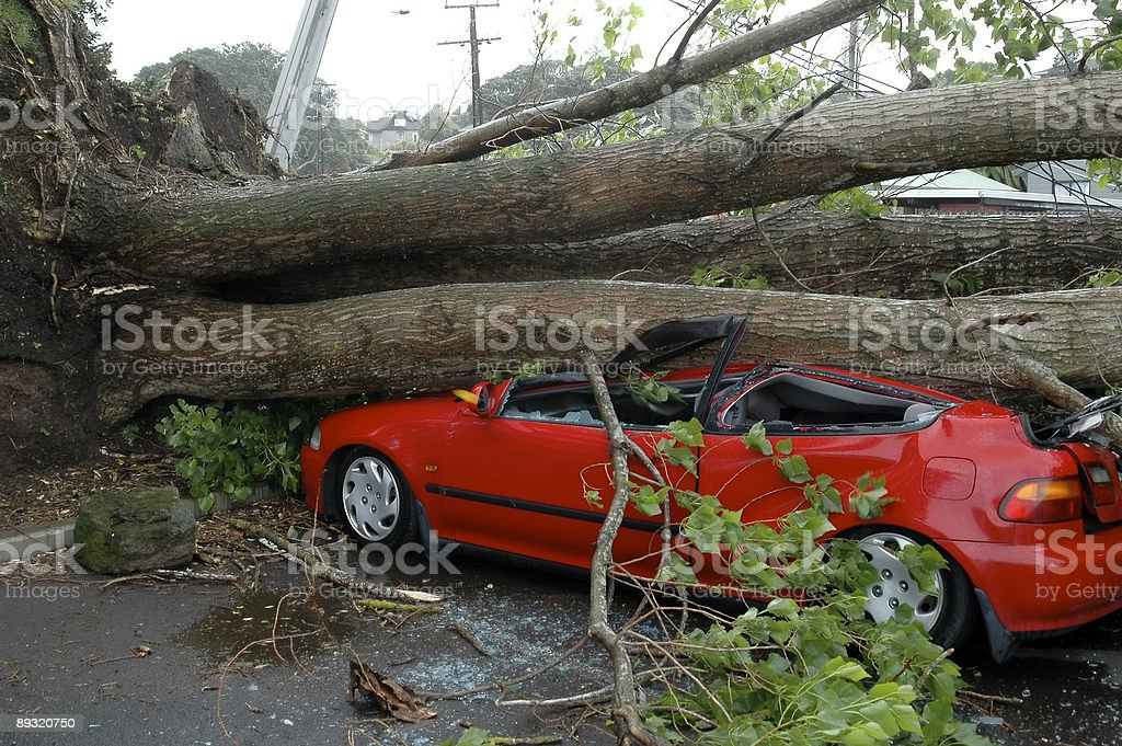 Car Crushed by Tree foto