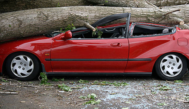 Car crushed  fallen tree stock pictures, royalty-free photos & images