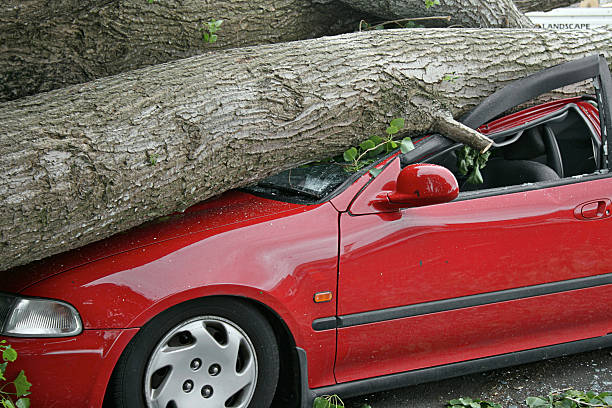 Car destroyed  fallen tree stock pictures, royalty-free photos & images