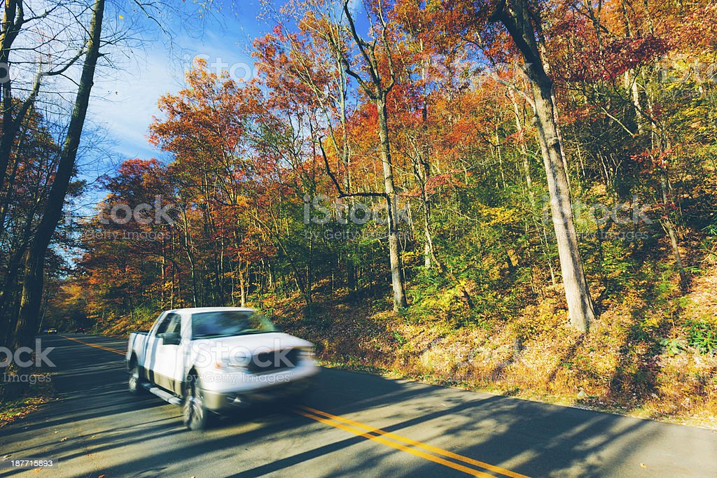 Auto fahren im Wald – Foto