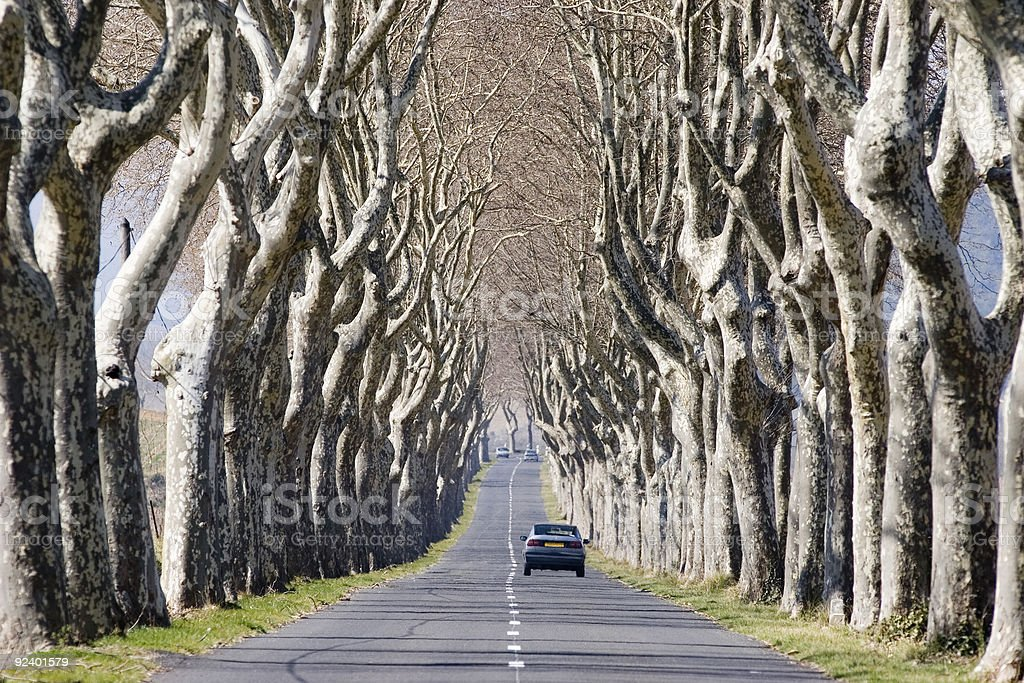 Car Driving On Road - Avenue Of Trees In France royalty-free stock photo