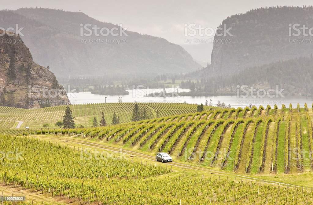 Car Driving Through Rolling Vinyards stock photo