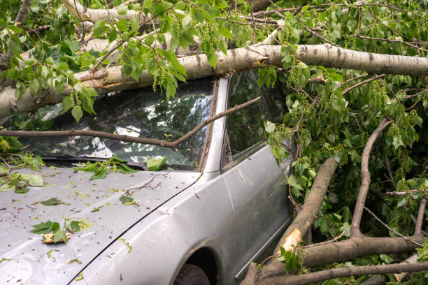 car filled with trees fallen during a strong hurricane