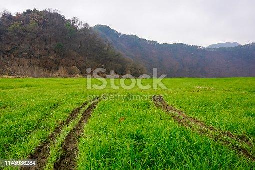 Car footprints on green grass
