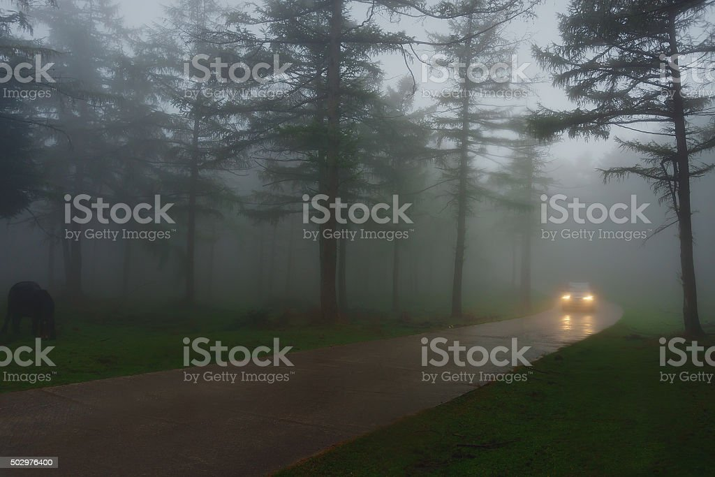 car in country road with fog and low visibility stock photo