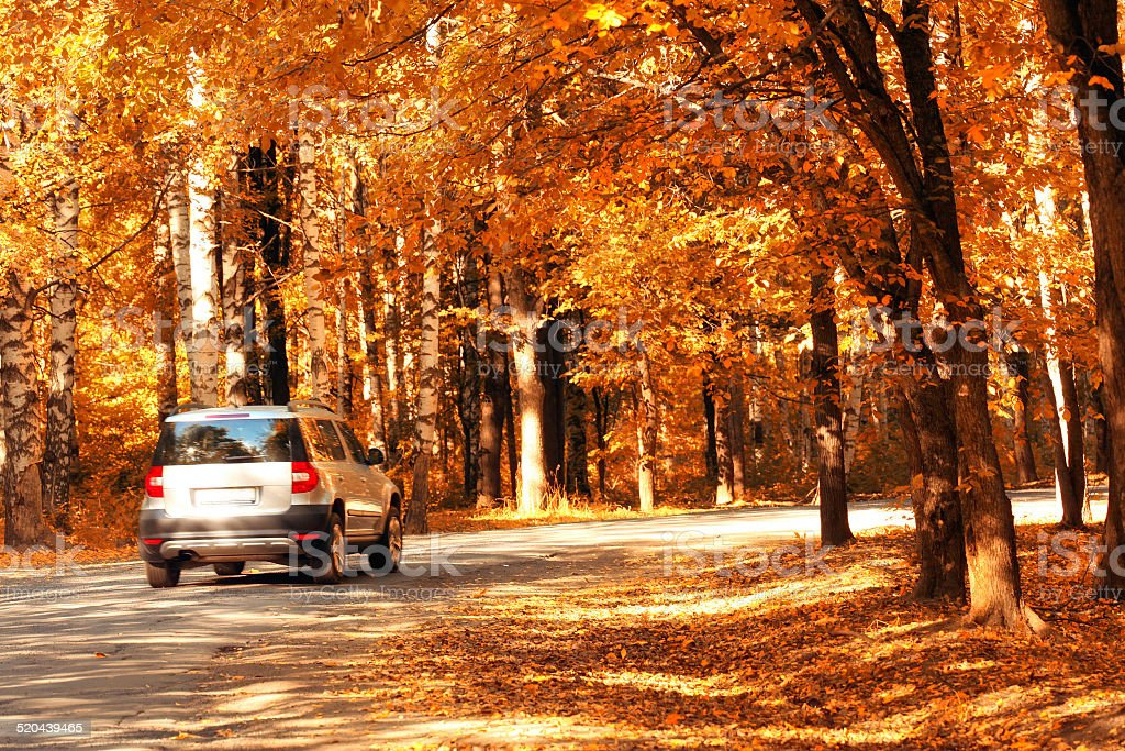 car in the autumn forest stock photo