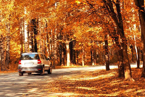 Coche en el bosque de otoño - foto de stock