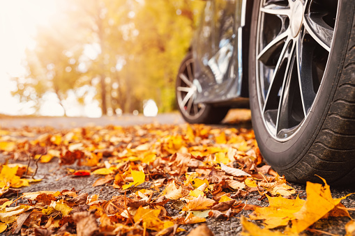 Car on asphalt road on autumn day at park. Colored leaves lying under the wheels of the vehicle.