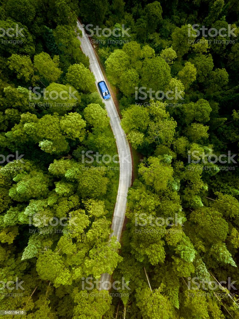 Car on road through a pine forest royalty-free stock photo