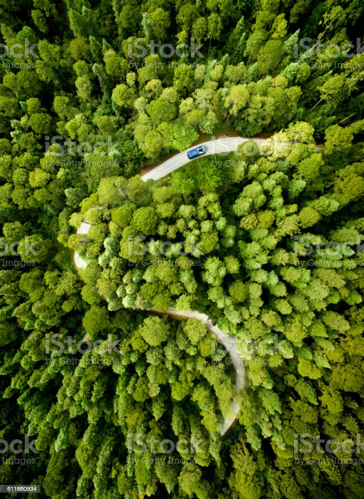 Car on road through a pine forest stock photo