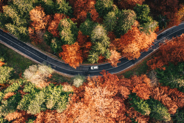 Car on the road surrounded by forest in the fall. Carpathian Mountains, Romania stock photo