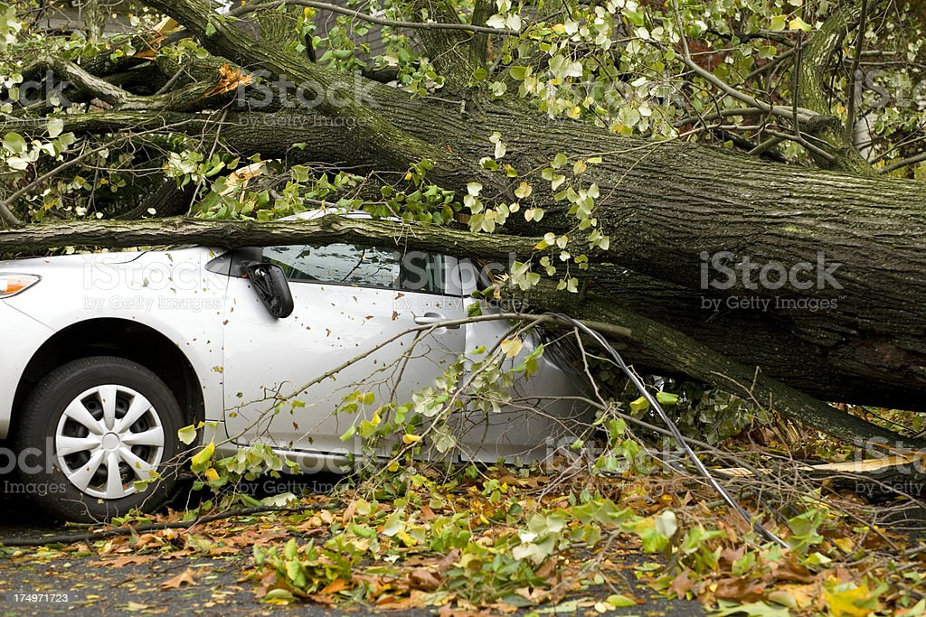 Car Squashed by Tree royalty-free stock photo