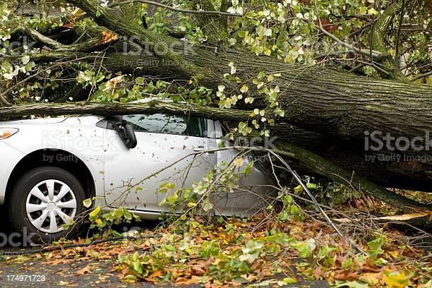 Car squashed by tree picture id174971723?b=1&k=6&m=174971723&s=612x612&h=gvcriass6wh9smc9a xijhbavu6p8bbf2zwqawofjl8=
