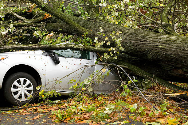 Car Squashed by Tree stock photo