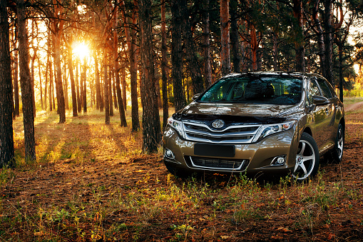 Car Toyota Venza In The Forest Stock Photo - Download Image Now