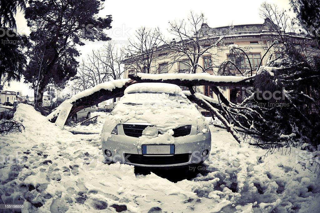 Voiture sous Arbre couché après la neige - Photo