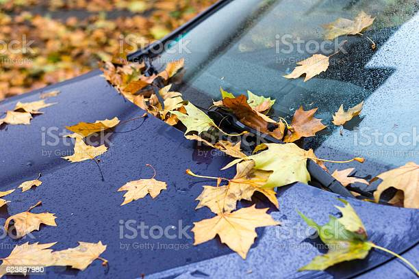 Photo of Car with autumn foliage on windscreen.
