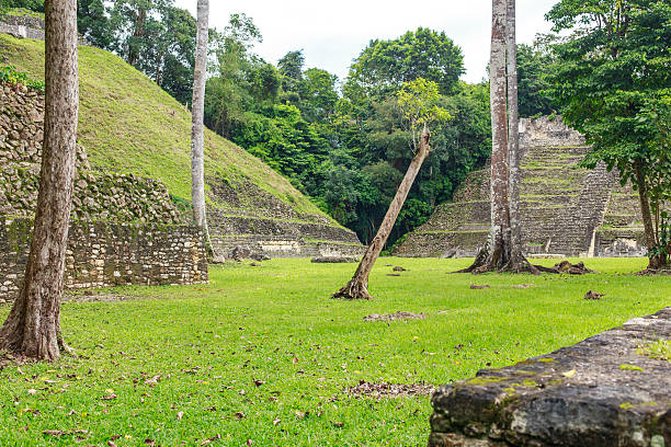 Caracol Caracol ruins. Cayo District. Belize. maya mountains stock pictures, royalty-free photos & images