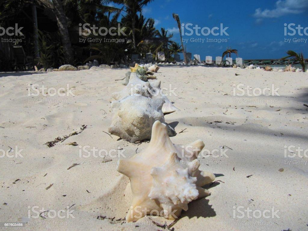 Caracoles en la playa stock photo