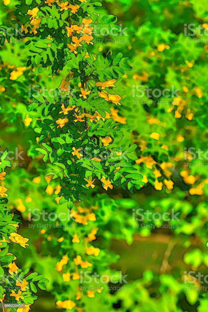 Caragana arborescens. Spring Garden. stock photo