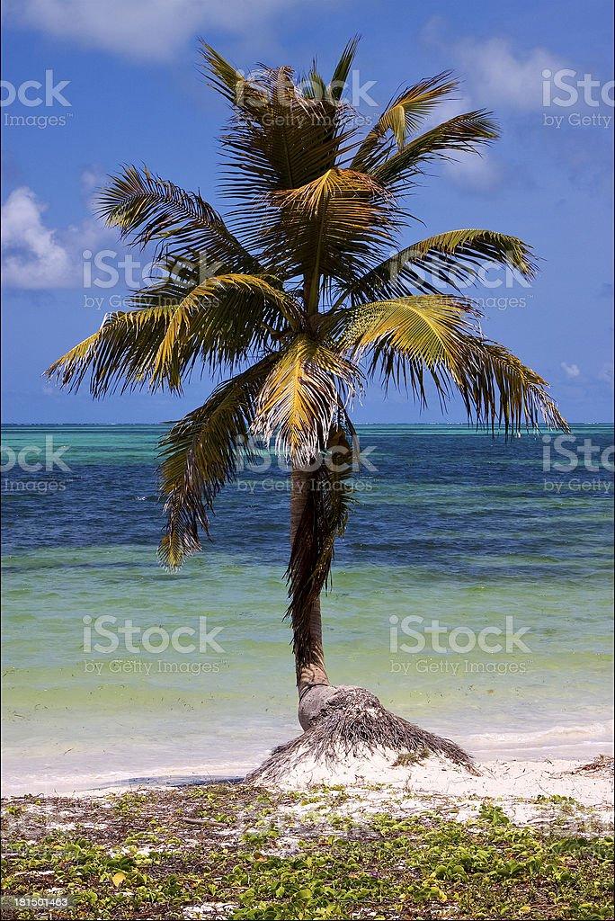 caraibbien blue lagoon sian kaan mexico stock photo