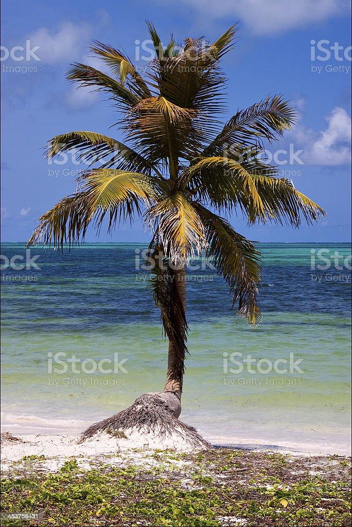 caraibbien blue lagoon sian kaan stock photo