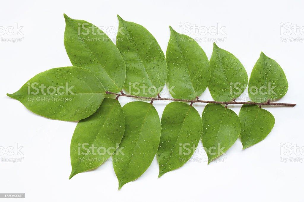 Carambola Leaf stock photo