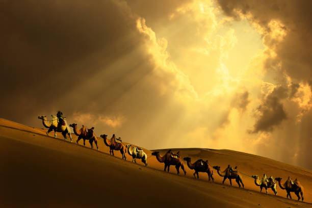 Caravan in the desert Caravan in the desert, Mongolia independent mongolia stock pictures, royalty-free photos & images