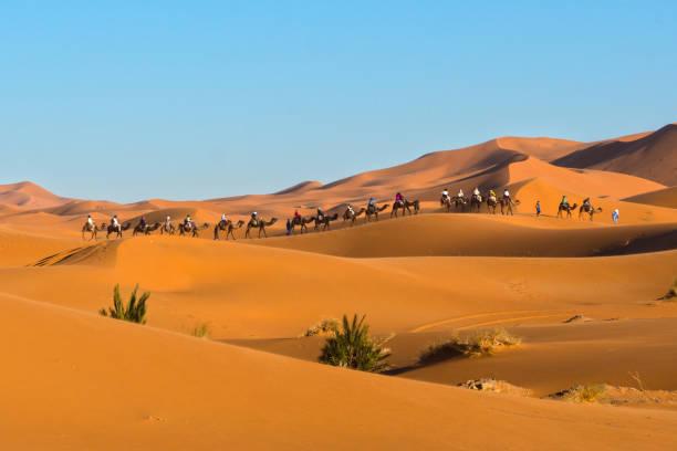 A caravan of camels at Erg Chebbi, Merzouga, Morocco stock photo